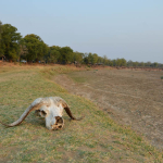 View from the Luangwa