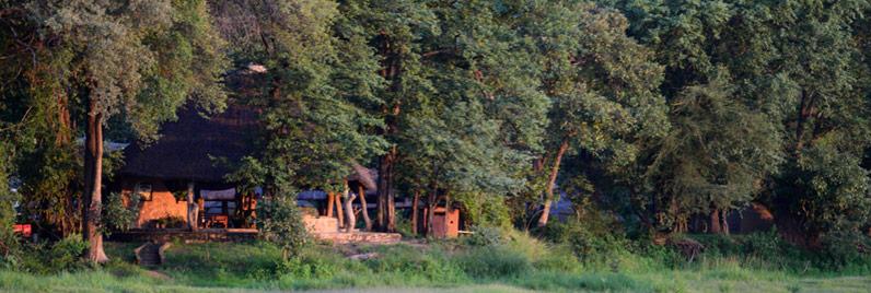 camp-bush