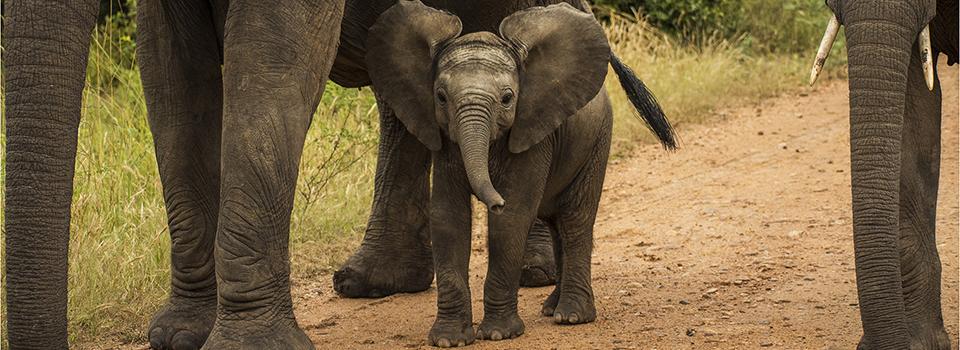 elephantBabe