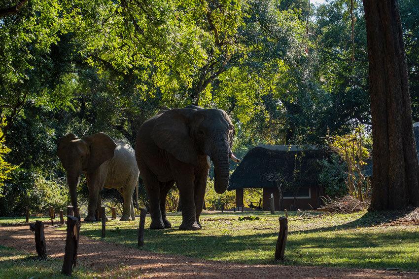 elephant-rush